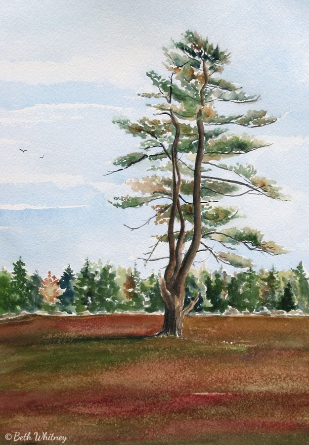 Lonely Pine Tree, an original watercolor painting by Beth Whitney