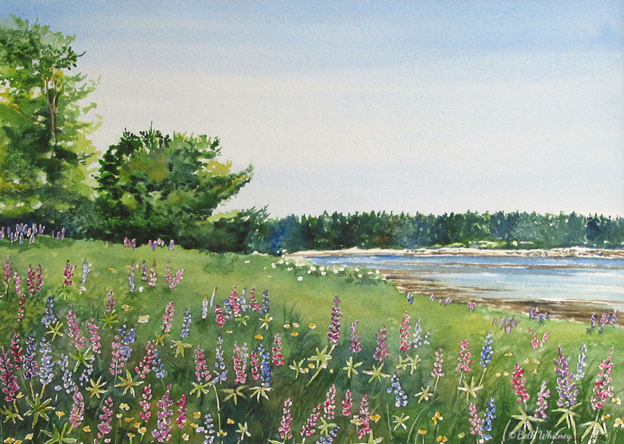 Vinalhaven Lupine, an original Maine watercolor painting by Beth Whitney