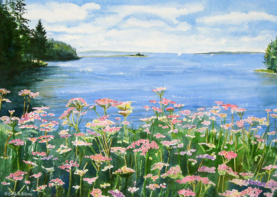 Wild Yarrow, an original Maine watercolor painting by Beth Whitney