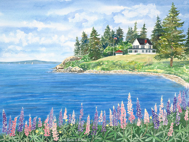 Seascape painting of lupine on Cape Rosier, Maine by artist Beth Whitney | DowneastWatercolors.com