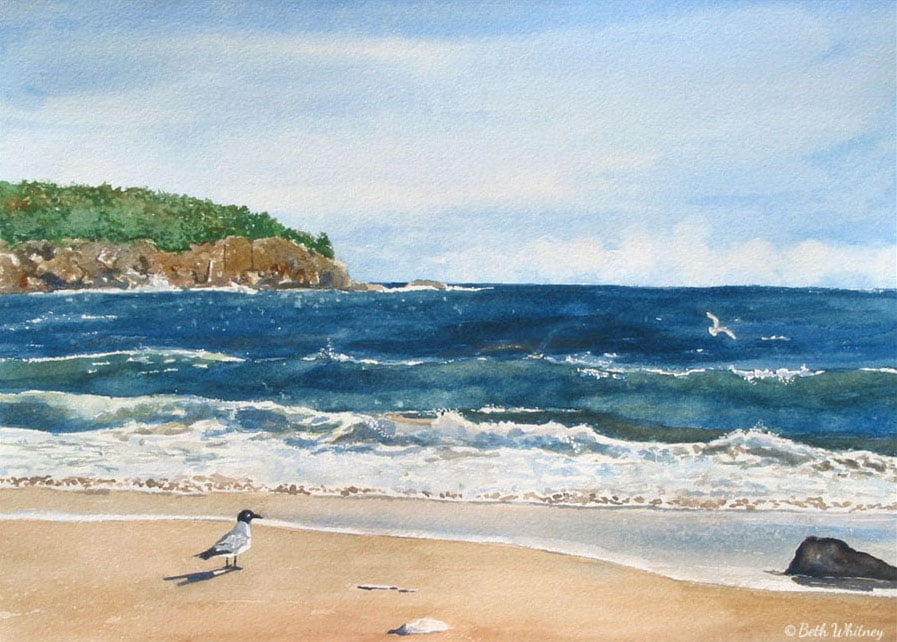 Painting of a laughing gull on Sand Beach in Acadia National Park by Beth Whitney | DowneastWatercolors.com