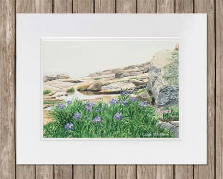 Watercolor painting of purple Irises on the rocky shore in Maine