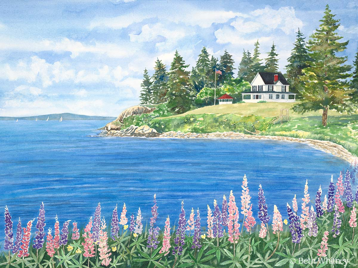 Lupine on Cape Rosier, an original watercolor painting by Beth Whitney