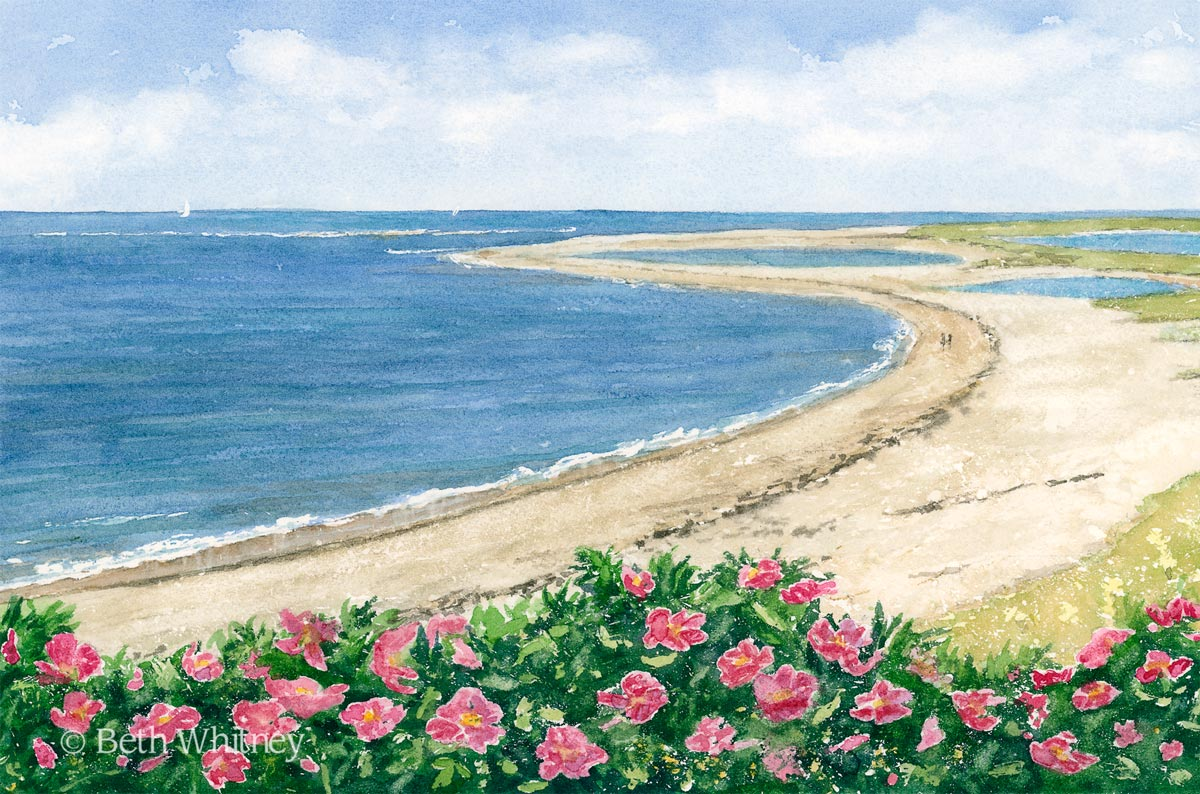 Watercolor painting of Lighthouse Beach roses on Cape Cod by artist Beth Whitney | Downeast Watercolors