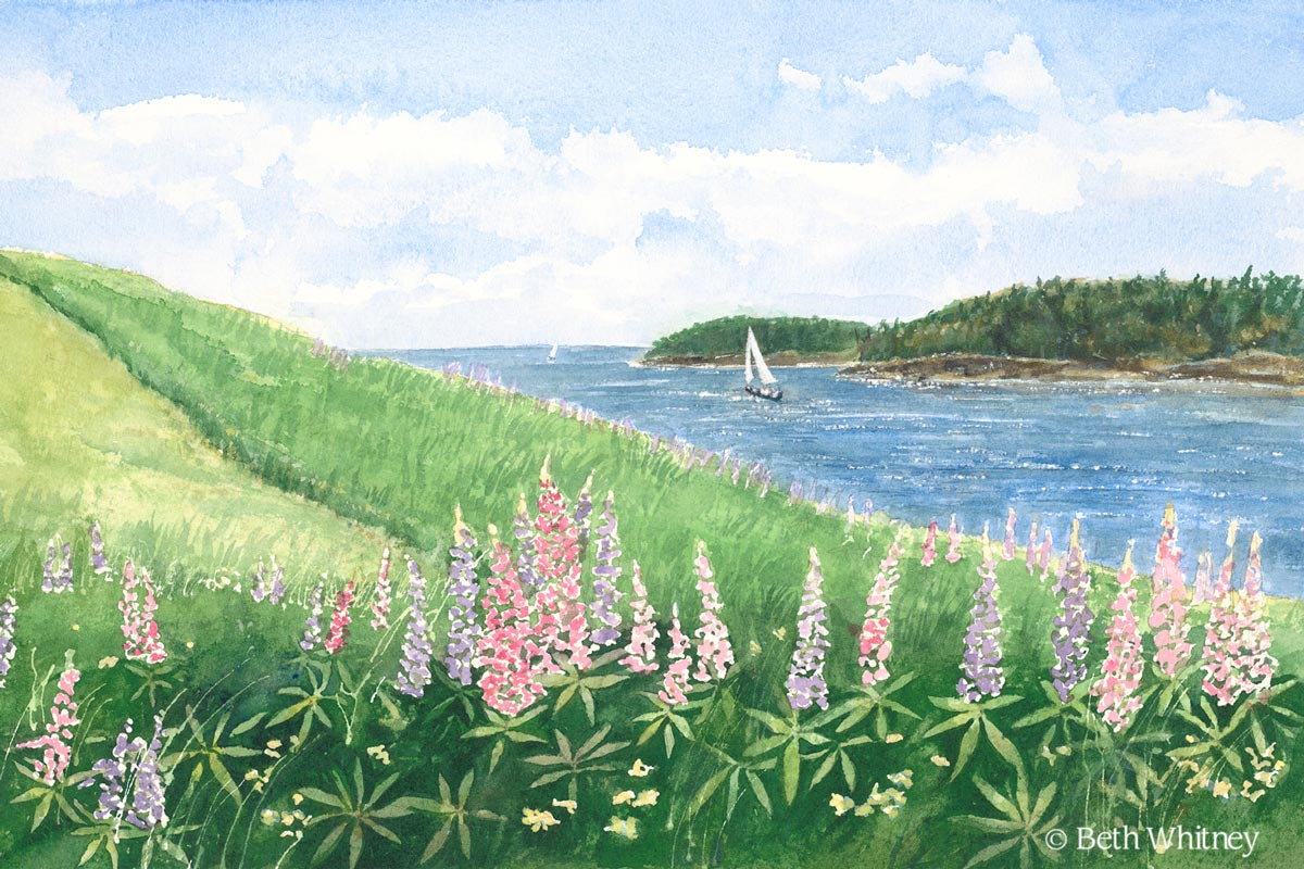 Painting of Deer Isle Lupine in Maine by artist Beth Whitney | DowneastWatercolors.com
