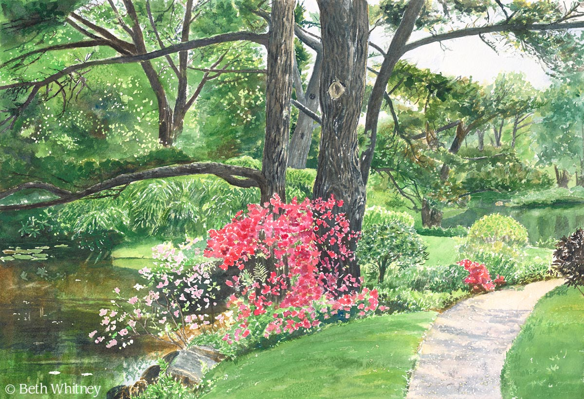 Original painting by Beth Whitney of the lily pond with pink rhododendrons at Asticou Azalea Garden in Northeast Harbor, Maine. | DowneastWatercolors.com