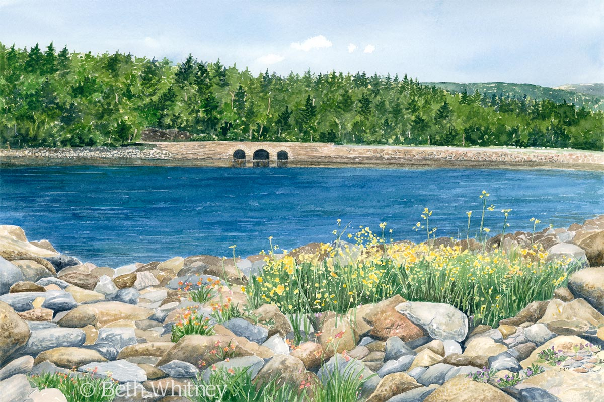 Otter Cove Bridge Acadia National Park Original Mdi