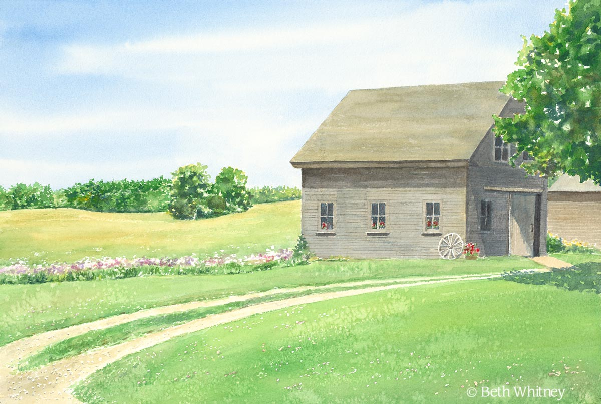 Original watercolor painting by Beth Whitney of a rustic barn with a golden field edged with summer phlox. | DowneastWatercolors.com