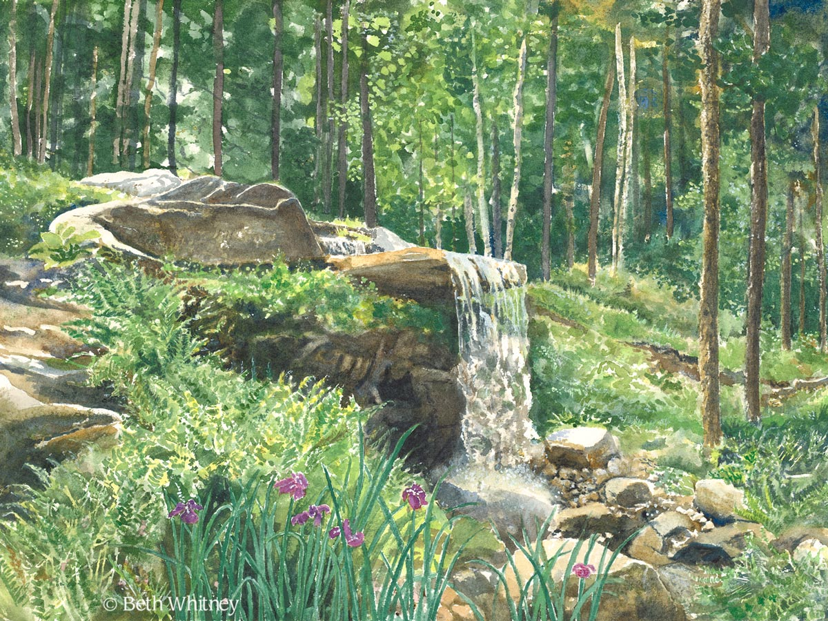 Original painting by Beth Whitney of the woodland waterfall at the Coastal Maine Botanical Garden in Boothbay, Maine | DowneastWatercolors.com