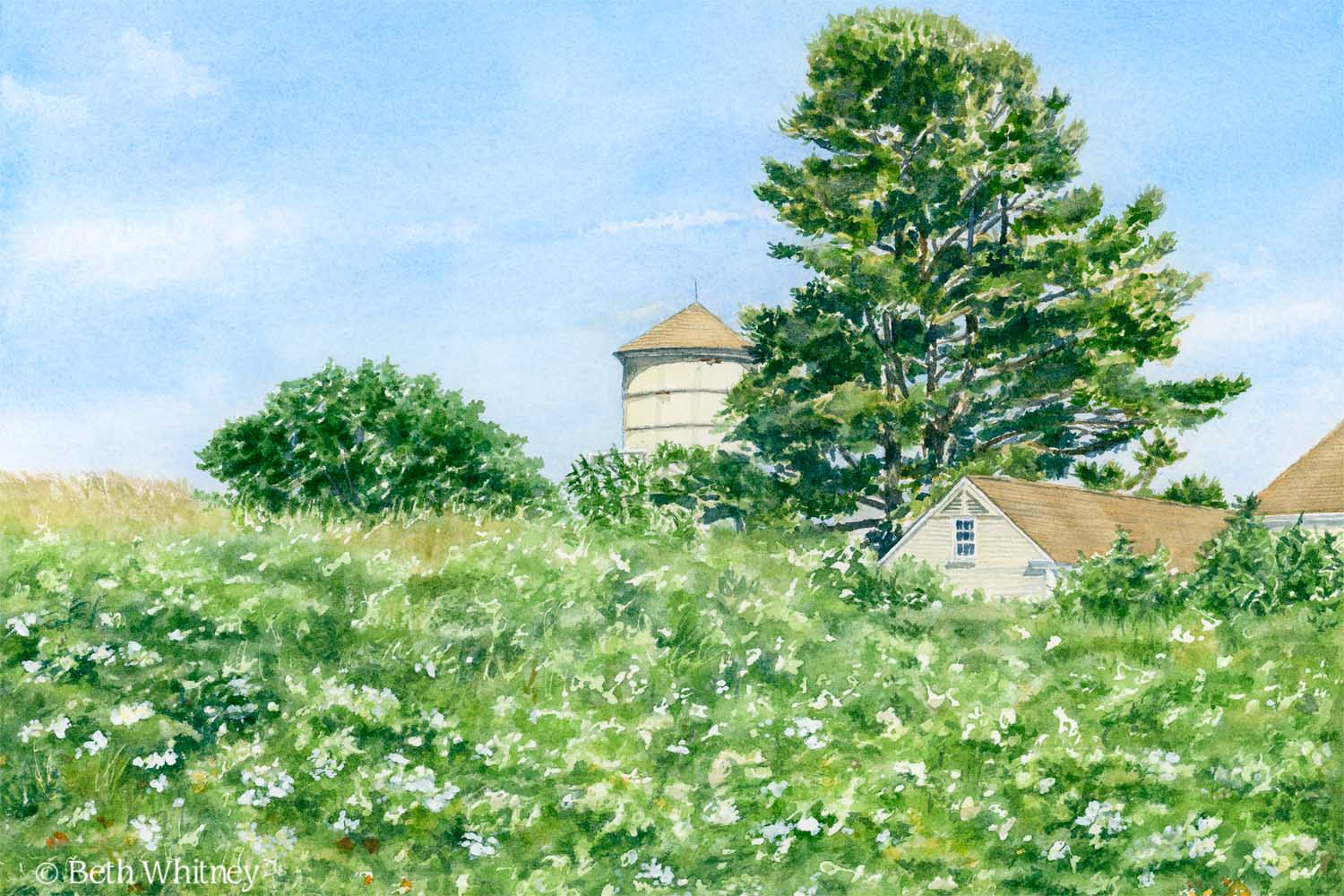 Watercolor painting of Laudholm Farm Wildflowers by Beth Whitney | Downeast Watercolors