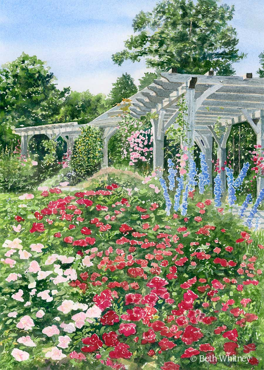 Watercolor painting of pink and red roses and large wooden arbor by Beth Whitney