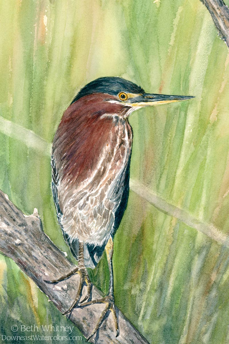 Painting of green heron fishing from a branch.