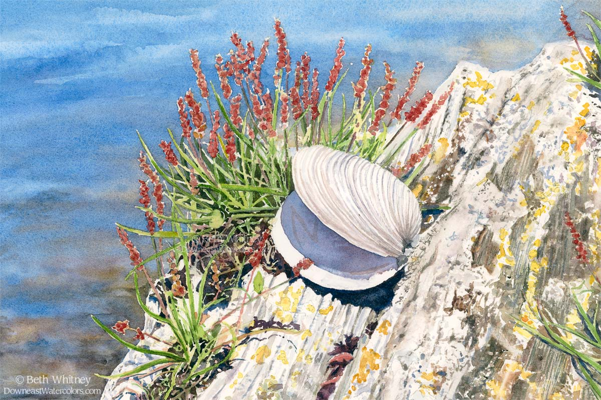Scallop shell, red flowers, rocks, and blue ocean shore.