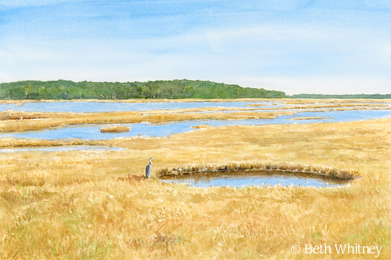 Watercolor painting of Scarborough Marsh by Beth Whitney
